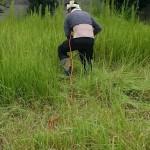 伊勢崎市 お庭の草刈りとお家のお片付け