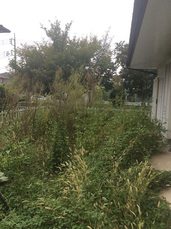 空家のお庭 草刈り 除草剤撒き